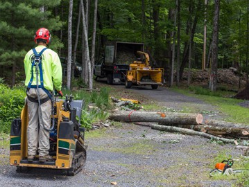 What to Look for When Hiring a Tree Removal Expert