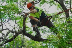 Save Yourself the Trouble and Hire a Tree Trimming Service
