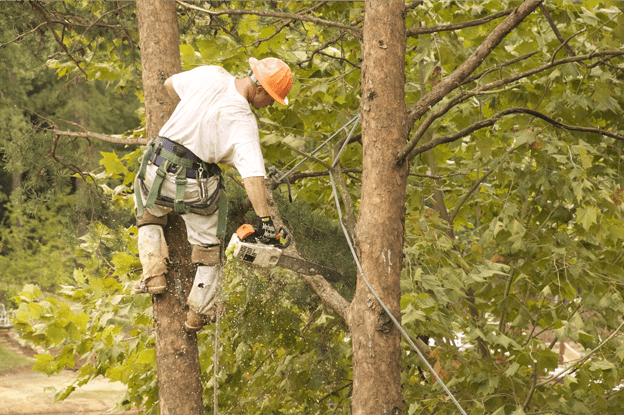 When Do You Need To Hire A Tree Service Provider?